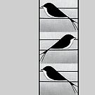 Swallows by Bluesrose