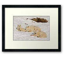 Three not so bad wolves Framed Print