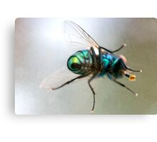 Fly through beer glass Canvas Print