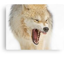 Mean looking Yawn! Canvas Print