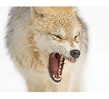 Mean looking Yawn! Photographic Print