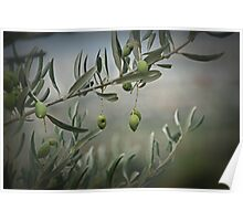 Tuscan Olives Poster