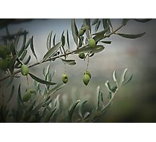 Tuscan Olives Photographic Print