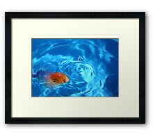 Goldfish in blue bowl Framed Print