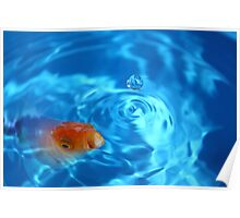 Goldfish in blue bowl Poster
