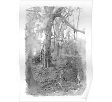 abstraktus woods 1 Poster