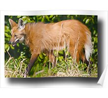 ..Maned Wolf.. Poster