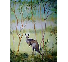 Think I see Kangaroo Photographic Print