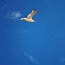 Seagull flying_take two by DanielVijoi
