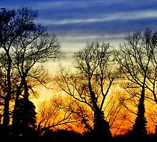 Sunset Trees In A Breeze by Sam Halford
