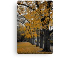 Autumn's Golden Gown  Canvas Print