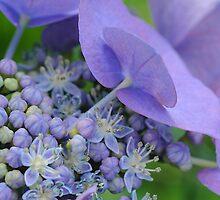 Star Buds by eleanor p.  labrozzi