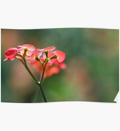 Red flowers against green Poster