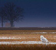 Snowy Owl at Twilight by PixlPixi