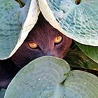 Eye Spy by Loree McComb
