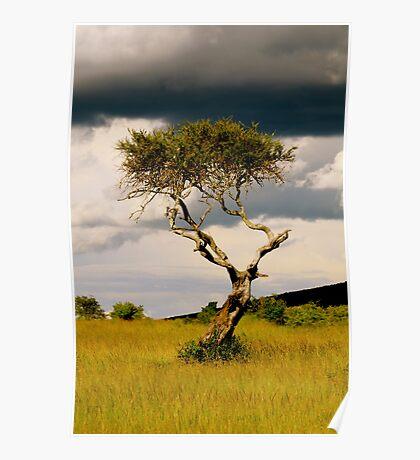 Maasai Mara Tree. Poster