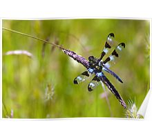 Black and Blue Dragonfly Poster