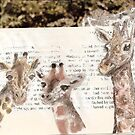 Giraffes by Claire Dimond