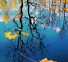 Reflection by Igor Zenin