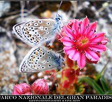 parco nazionale del gran paradiso by kippis