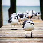 Gulls on the Bay by WilliamJPhoto