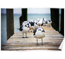 Gulls on the Bay Poster