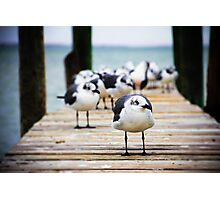 Gulls on the Bay Photographic Print