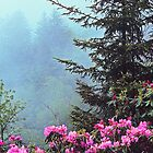 RHODODENDRON IN FOG by Chuck Wickham