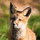 Fox Kit Portrait by Jay Ryser