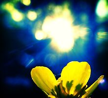 Buttercup Sunshine by Heather Turner