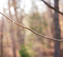 The Long Trek - Nature, bugs, bokeh by Kristi B