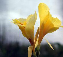 Spring Bloom by BLuke