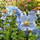 Blue in the Garden by Esperanza Gallego