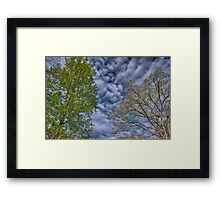 Spring Trees Under Rippled Sky Framed Print