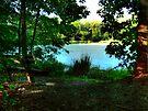 Lake Side Seat by Marcia Rubin