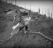Landing by Lucinda Walter