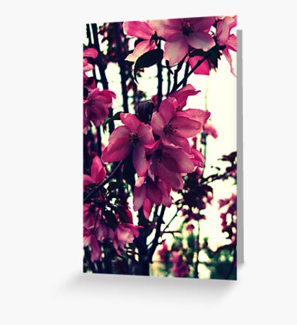 Pink Blooms - Spring in New England Greeting Card
