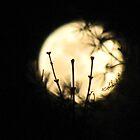 Perigee moon by kflanary
