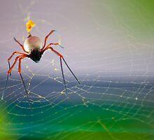 Spider Lays in Wait by rjmp