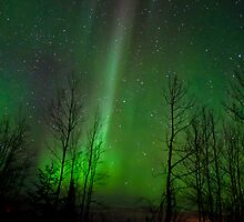 Straight Up Auroras  by peaceofthenorth
