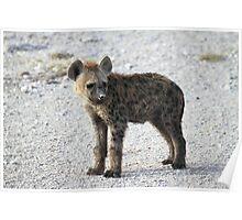 Spotted Hyena pup, Kenya.  Poster
