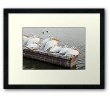 Pelican Family Framed Print