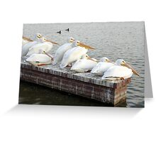 Pelican Family Greeting Card