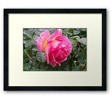 Rose on Gold Base Framed Print