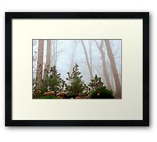 Morning Mist Framed Print
