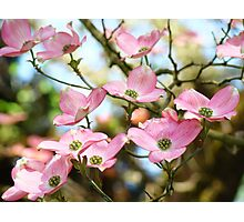 Trees Pink Dogwood Tree Flowers art Baslee Troutman Photographic Print