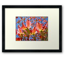 Bright Colorful Floral art Pink Dogwood Flowers Baslee Troutman Framed Print