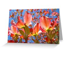 Bright Colorful Floral art Pink Dogwood Flowers Baslee Troutman Greeting Card