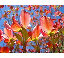 Bright Colorful Floral art Pink Dogwood Flowers Baslee Troutman Photographic Print