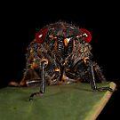 Cicada this! by aluzhun